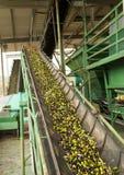Correias transportadoras do moinho verde-oliva Imagens de Stock Royalty Free
