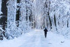 Correndo nella foresta Immagini Stock
