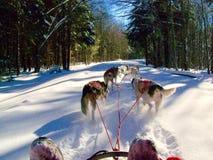 Correndo nella neve fresca fotografia stock