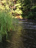 Corrente attraverso una foresta nordica di verde di Wisconsin Fotografia Stock