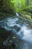 Corrente & cascate, Greenbrier, Great Smoky Mountains NP Fotografia Stock
