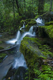 Corrente & cascate, Greenbrier, Great Smoky Mountains NP Fotografia Stock
