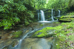 Corrente & cascate, Greenbrier, Great Smoky Mountains NP Fotografia Stock Libera da Diritti
