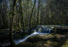Corrente che attraversa foresta muscosa Fotografie Stock