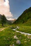 Corrente che attraversa prato alpino di fioritura Fotografia Stock Libera da Diritti