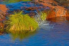Corrente che circola sulle rocce con erba Fotografia Stock