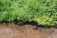 Corrente con acqua trasparente pulita Fotografie Stock Libere da Diritti