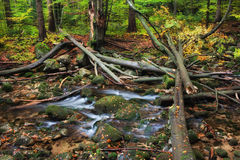 Corrente con gli alberi caduti in Autumn Forest Fotografia Stock Libera da Diritti