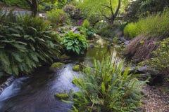 Corrente a Crystal Springs Rhododendron Garden Fotografia Stock Libera da Diritti