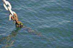 Corrente de âncora na água fotografia de stock
