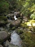 Corrente del fiume dentro la foresta del cedro Fotografia Stock
