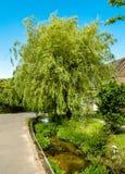 Corrente del giardino Fotografie Stock