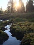 Corrente del prato di tramonto, supporto Shasta, CA Fotografia Stock