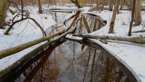Corrente dell'acqua in foresta Fotografia Stock Libera da Diritti