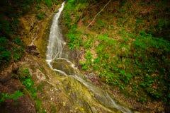 Corrente dell'acqua nella foresta Fotografia Stock Libera da Diritti