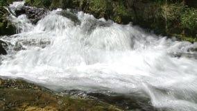 Corrente dell'acqua in una foresta archivi video