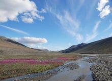 Corrente dell'isola Ellesmere Fotografia Stock