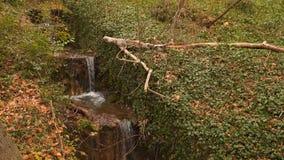 Corrente della cascata nel legno archivi video