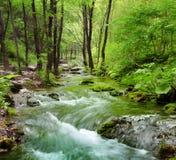 Corrente della foresta fotografie stock