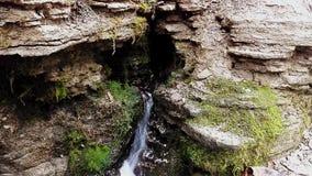 Corrente della foresta che investe le rocce stock footage
