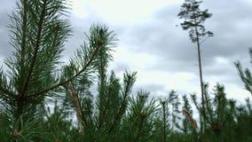 Corrente della foresta con acqua trasparente che entra nel legno Paesaggio con il ruscello video d archivio
