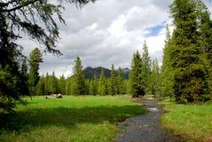 Corrente della montagna fotografie stock libere da diritti