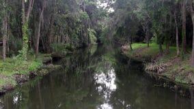 Corrente delle zone umide di Florida durante la pioggia leggera archivi video
