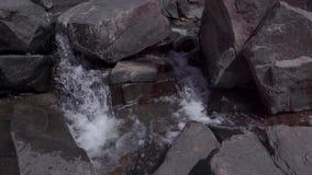 Corrente di acqua nel selvaggio stock footage