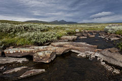 Corrente di Stoney con le montagne nel fondo Fotografia Stock