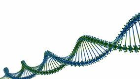 Corrente do ADN video estoque