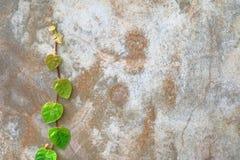 Corrente do coração - o verde dado forma sae na parede exterior imagens de stock royalty free