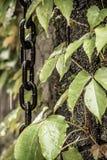 Corrente e folhas na parede Foto de Stock Royalty Free