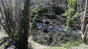 Corrente e foresta pirenaiche in Aude, Francia stock footage