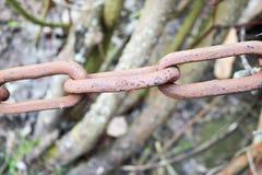Corrente forjada forte oxidada oxidada do ferro do metal do vintage antigo velho marrom com relações conectadas no fundo dos ramo foto de stock