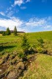 Corrente fra la foresta sul pendio di collina Immagini Stock Libere da Diritti