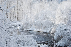 Corrente fredda ghiacciata Immagini Stock