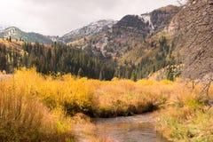 Corrente a Jordan Pines in grande canyon del pioppo Immagine Stock