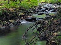 Corrente magica della foresta di esposizione lunga con le pietre, gli alberi e le radici immagini stock