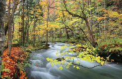 Corrente misteriosa di Oirase nella foresta di autunno Fotografia Stock