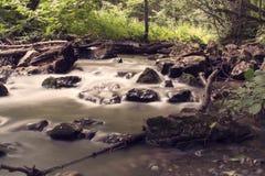 Corrente nella foresta Fotografia Stock Libera da Diritti