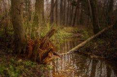 Corrente nella foresta Immagine Stock Libera da Diritti