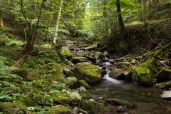 Corrente nella foresta della Toscana Immagine Stock