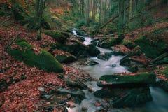 Corrente nella foresta di autunno immagini stock