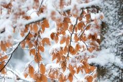 Corrente nella foresta di autunno fotografie stock libere da diritti