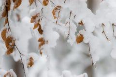 Corrente nella foresta di autunno fotografia stock libera da diritti