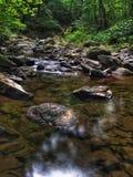 Corrente nella foresta verde fertile di estate Fotografia Stock Libera da Diritti
