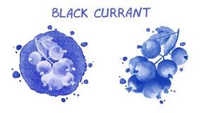 corrente nera Illustrazione dell'acquerello Fotografia Stock