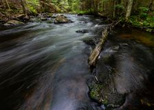 Corrente precipitante al vecchio ceppo di legni e Boulder muscoso fotografia stock libera da diritti