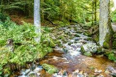 Corrente rocciosa che attraversa terreno boscoso verde fertile Immagini Stock Libere da Diritti