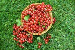 Corrente rossa Fotografie Stock